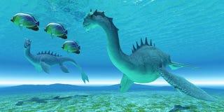 Sea Dragon Fight. Two Sea Dragon fight over territory while three Redfin Angelfish swim away Stock Photos