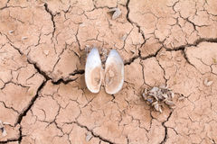 Sea drought change of  climate heat water Royalty Free Stock Photo