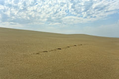 Sea dune with footprints Stock Image