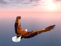 Sea Eagle. Computer generated 3D illustration with a Sea Eagle at sunset Stock Photos