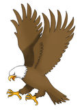 The Sea eagle fly. Vector illustration of the Sea eagle flying, symbol of the united states of america and numerous football and ice hockey teams around the Stock Image