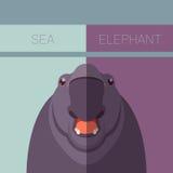 Sea elephant flat postcard Stock Image