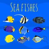 Sea exotic ocean tropical colorful fishes. Royalty Free Stock Photos
