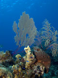 Sea Fan and Blue Fish Royalty Free Stock Photos