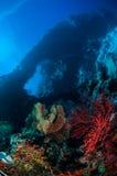 Sea fan Melithaea and sea fan Subergorgia suberosa in Banda, Indonesia underwater photo Stock Photos