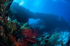 Sea fan Melithaea and sea fan Subergorgia suberosa in Banda, Indonesia underwater photo Royalty Free Stock Photo