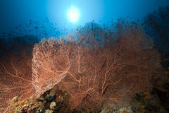 Sea fan and tropical underwater life. Stock Photos