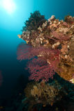 Sea fan and  underwater scenery in the Red Sea. Stock Photo