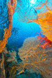 Sea fans and glassfish in the Red Sea. Stock Photos
