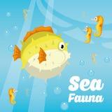 Sea Fauna graphic design, vector illustration Stock Image