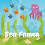Sea Fauna graphic design, vector illustration Royalty Free Stock Photos