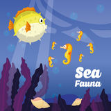 Sea Fauna graphic design, vector illustration Royalty Free Stock Images