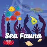 Sea Fauna graphic design, vector illustration Royalty Free Stock Photo