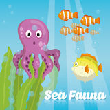 Sea Fauna graphic design, vector illustration Stock Images