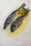 Sea fish Stock Image