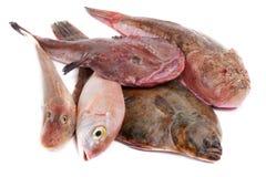 Sea fish Stock Photos