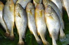 Sea fish. Pile of fresh sea fish Royalty Free Stock Images
