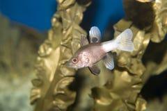 Sea fish Royalty Free Stock Images
