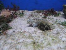 Sea Fish in Aquarium Stock Images