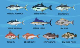 Sea Fish Cartoon Design Vector Set stock illustration