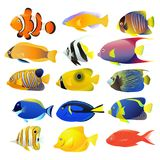 Sea fish collection isolated. On white background.  illustration Stock Photography