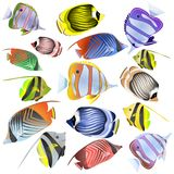 Sea fish collection isolated on white background. Vector illustration Stock Photos