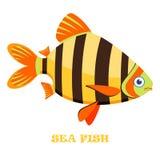 Sea Fish color vector illustration. Sea Fish color vector illustration on white background Royalty Free Stock Photo