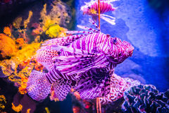 Sea fish and coral Royalty Free Stock Images