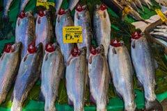 Sea fish on counter at market Stock Photos