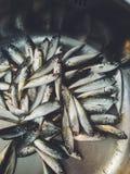 Sea fish. Crimea. Russia. Royalty Free Stock Photography