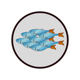 Sea fish emblem icon. Vector illustration design Royalty Free Stock Photos