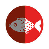 Sea fish emblem icon. Vector illustration design Stock Photography