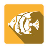 Sea fish emblem icon. Vector illustration design Stock Photo