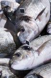 Sea fish exposed Stock Photo