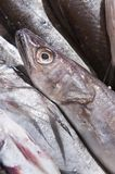 Sea fish exposed Royalty Free Stock Photo