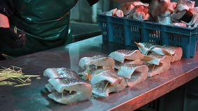 Sea fish factory. Cut fillet red worker stock video