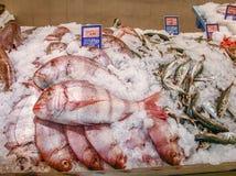 Sea fish at the fish market Stock Photography