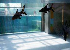 Sea fish floating in a large aquarium behind the glass stock images