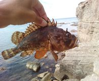 Sea fish in hand. Sea fish ruff in hand fishing Royalty Free Stock Images