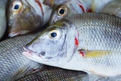 Sea fish head backround Stock Image