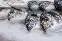 Sea fish on ice Royalty Free Stock Photography