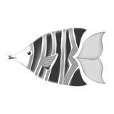 Sea fish icon. Over white background. vector illustration Stock Photos