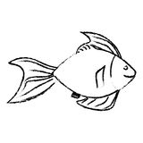 Sea fish icon. Over white background. vector illustration Royalty Free Stock Photography