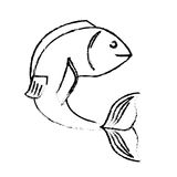 Sea fish icon. Over white background. vector illustration Royalty Free Stock Image