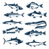 Sea fish icon set for seafood and fishing design Stock Photography