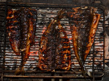 Sea fish Mackerel, grilled on wood. Stock Images
