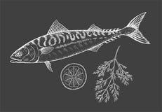 Sea fish mackerel with lemonl on a black background