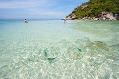 Sea. Fish in Sea at Nang Yuan island Thailand Royalty Free Stock Image