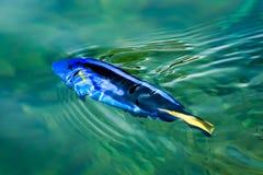 Sea fish. Fish sea ocean underwater aquarium reef  marine animal Royalty Free Stock Photo