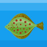 Sea fish  plaice on the blue background. Colorful icon sea fish plaice on the blue background Stock Photo